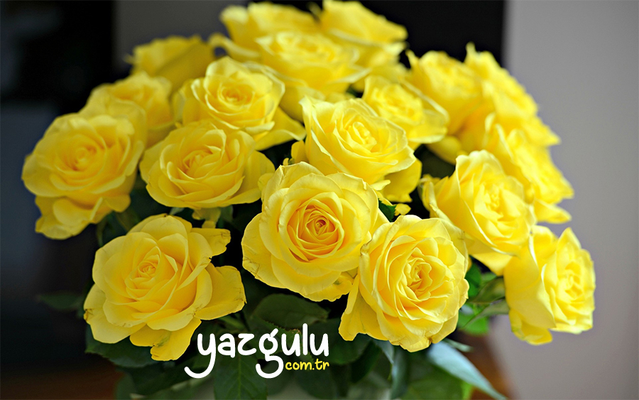 Sarı Gül | Yellow Rose
