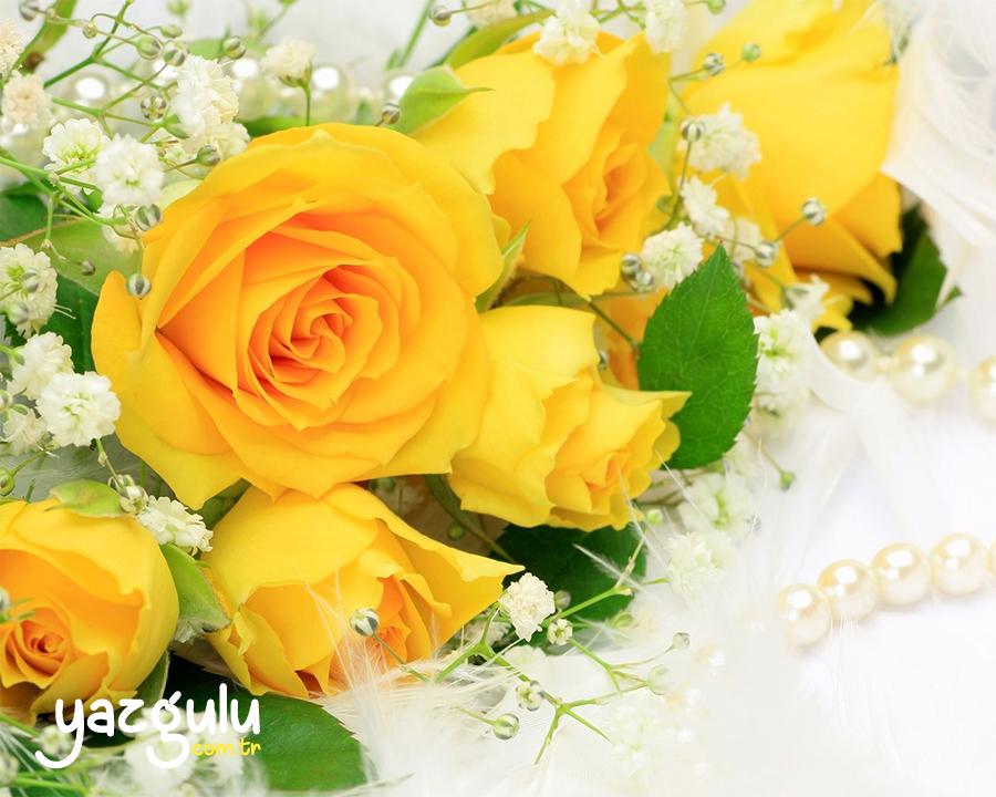 Sarı Gül | Yellow Rose